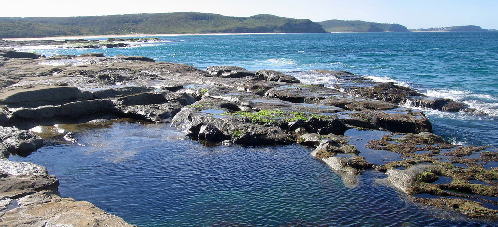 Beyond cannibalism, can tide pools help explain the universe?