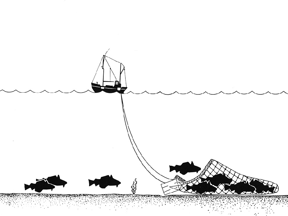 Commercial fishing in Marine Protected Areas highlights the need for careful management
