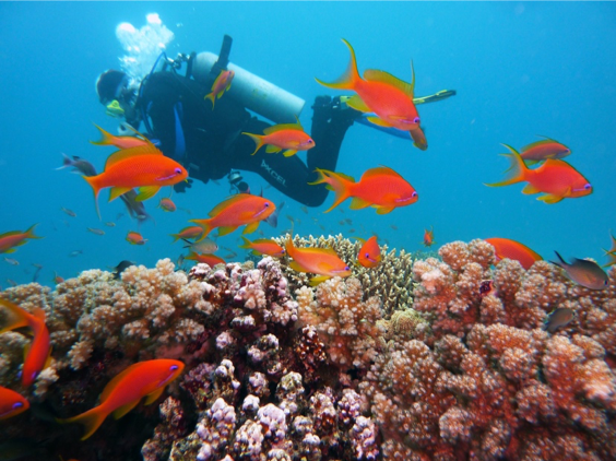 Can Coral Reefs Strangled By Algae Recover?