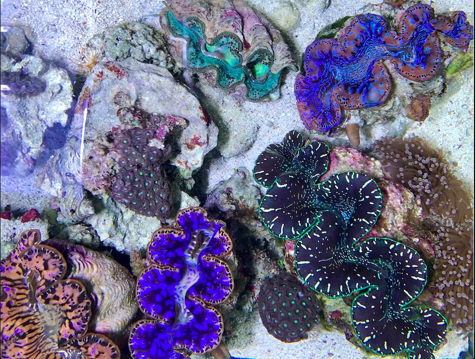 Giant Clams vs. Small Plastics