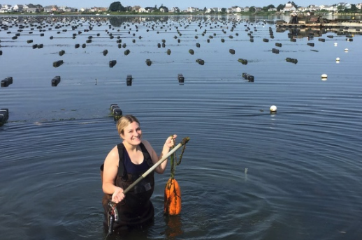 SURFO SPECIAL: The world is your oyster: Collecting data on Matunuck Oyster Farm