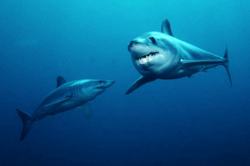Are you feeding your pet endangered sharks?