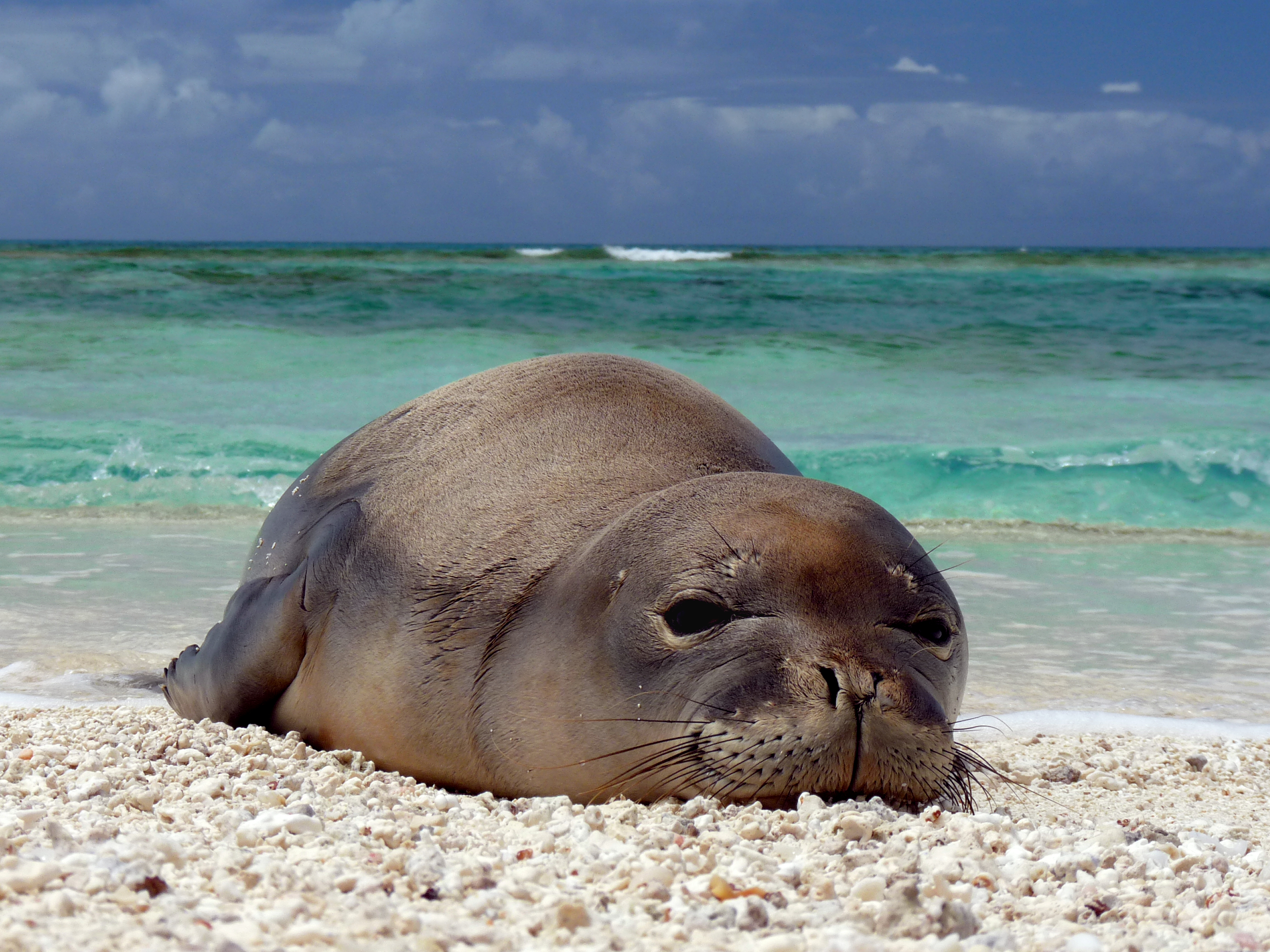 #Monkseals on Instagram can Teach Scientists about Human-Wildlife Interaction