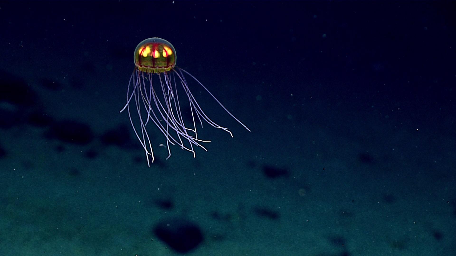 Deep Sea: The Final Frontier