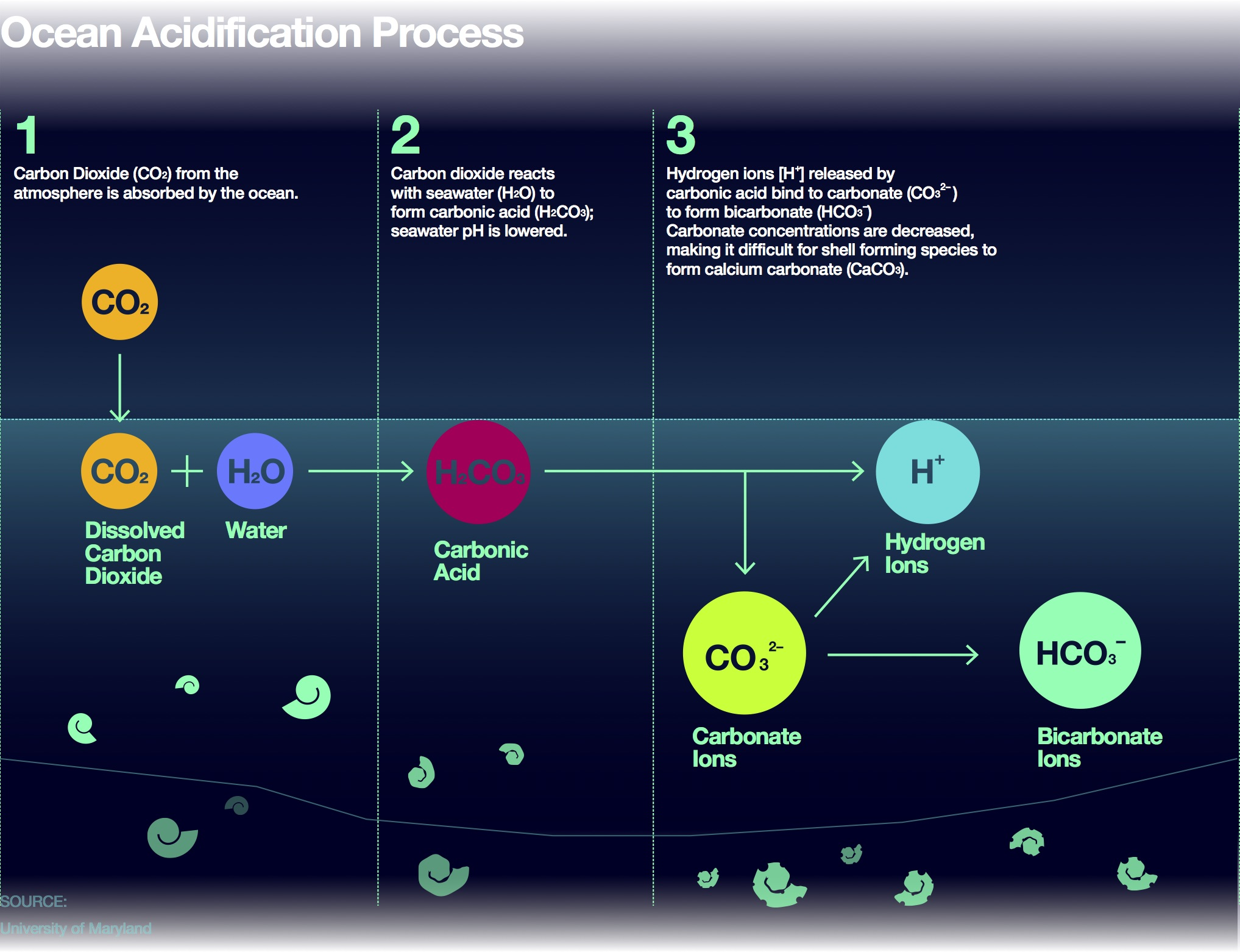 Ocean acidification: The lesser known CO2 Problem