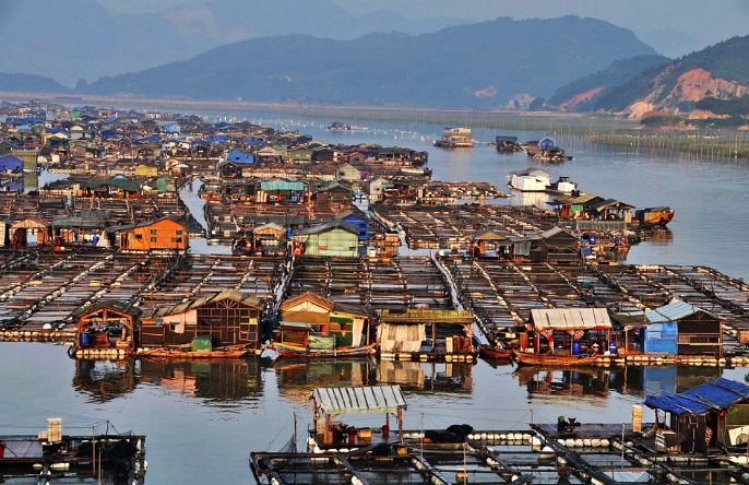 To fish or not to fish: Exploring China's seafood production strategies