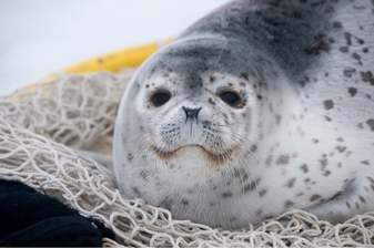 A transforming ecosystem: Chukchi and Bering Sea