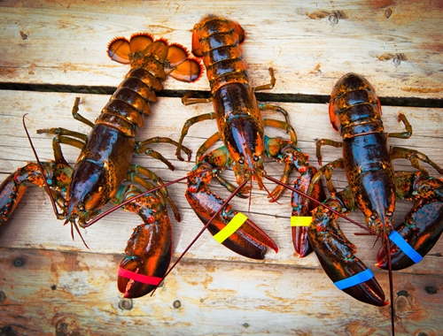 Clawing Your Way to the Top: Lobster Farming in Vietnam