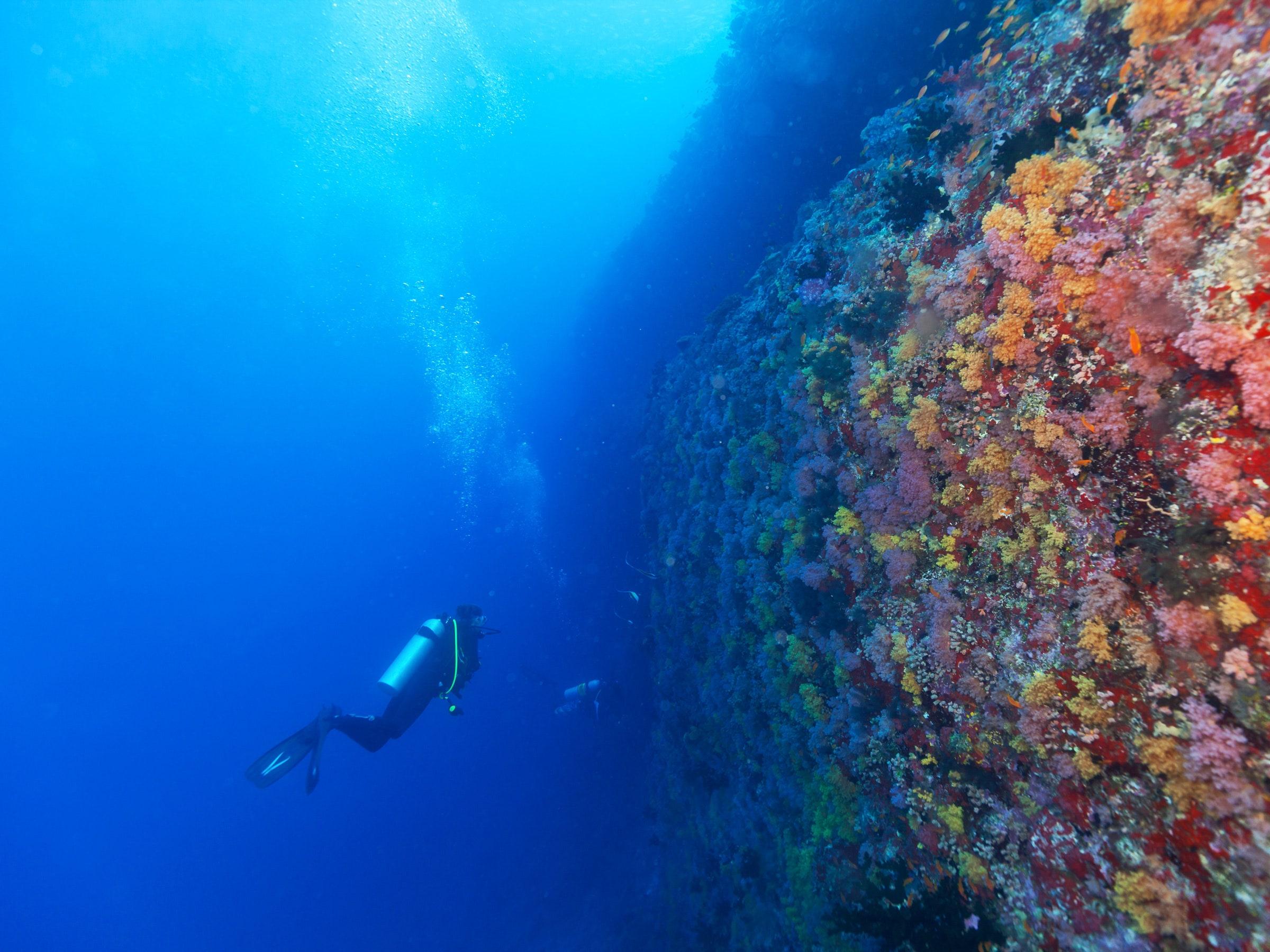 Let Marine Microbes Be Thy Medicine