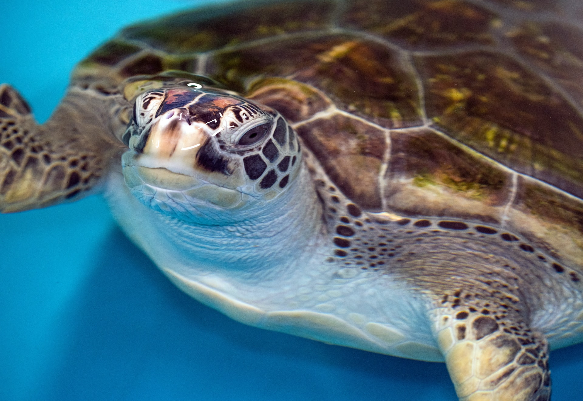 The Adventures of Shell-ock Holmes: A case of green sea turtles