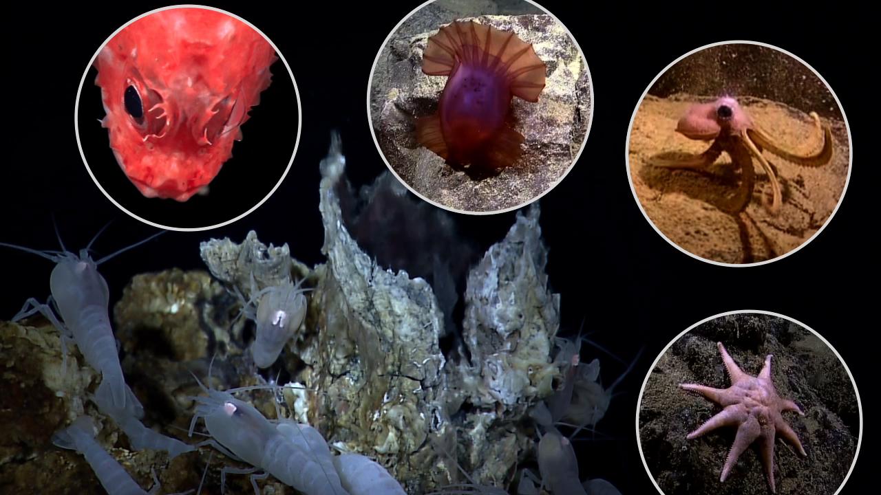 Hotspots of geology, biology, and economic interest