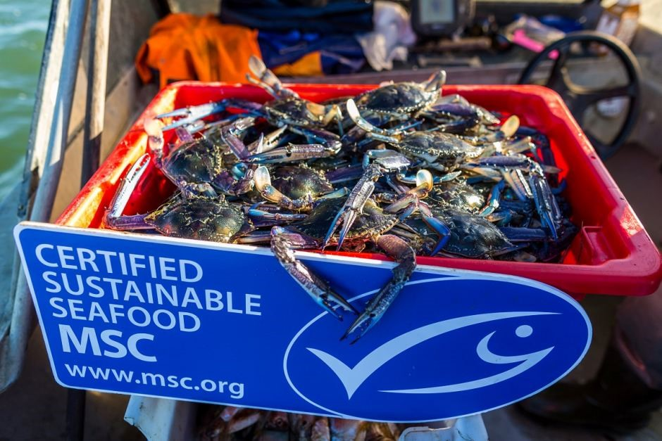 Fisheries and Sustainability Certification: Do the benefits outweigh the costs?