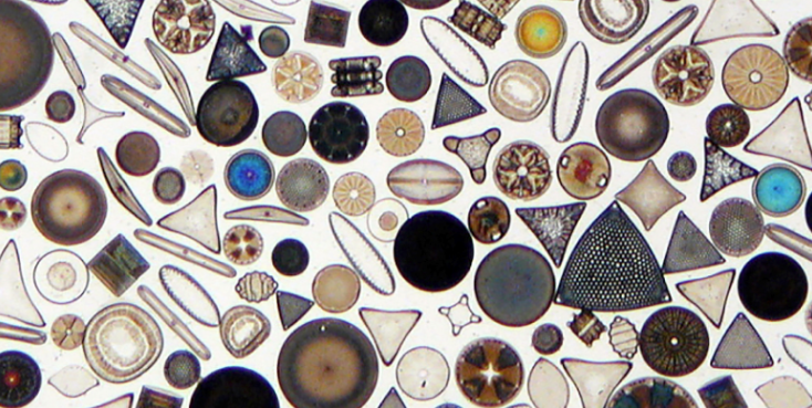 Southern Ocean diatoms: while they're small, they are mighty!