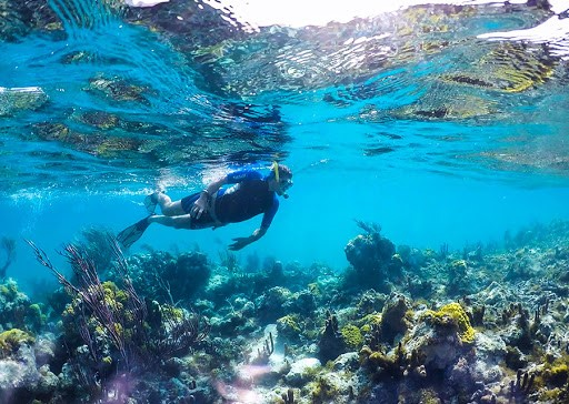 Coral Reefs Bounce Back in Turks and Caicos Islands