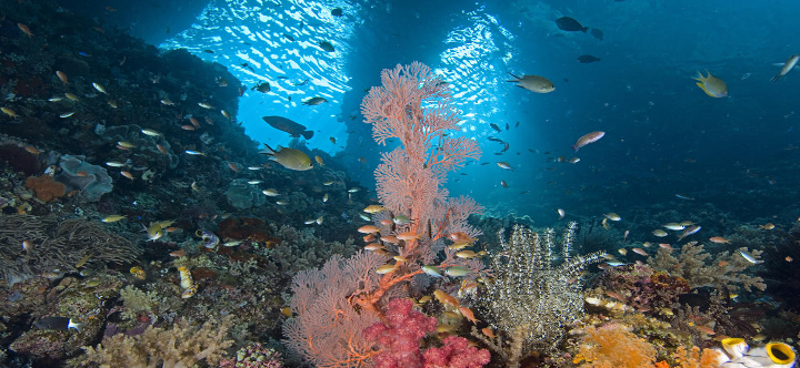 Peace for Coral Reefs