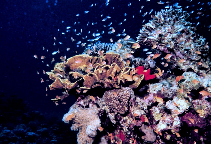 In an Uncertain Future, How Might Corals Survive?