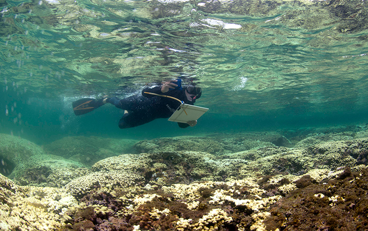 Can Corals Recover from the Effects of Climate Change?