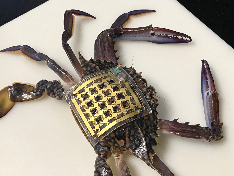 Making Animals Comfortable In Their (Marine) Skin