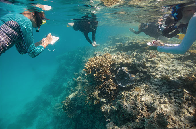 Getting your toes wet: Citizen science as a means for long-term monitoring