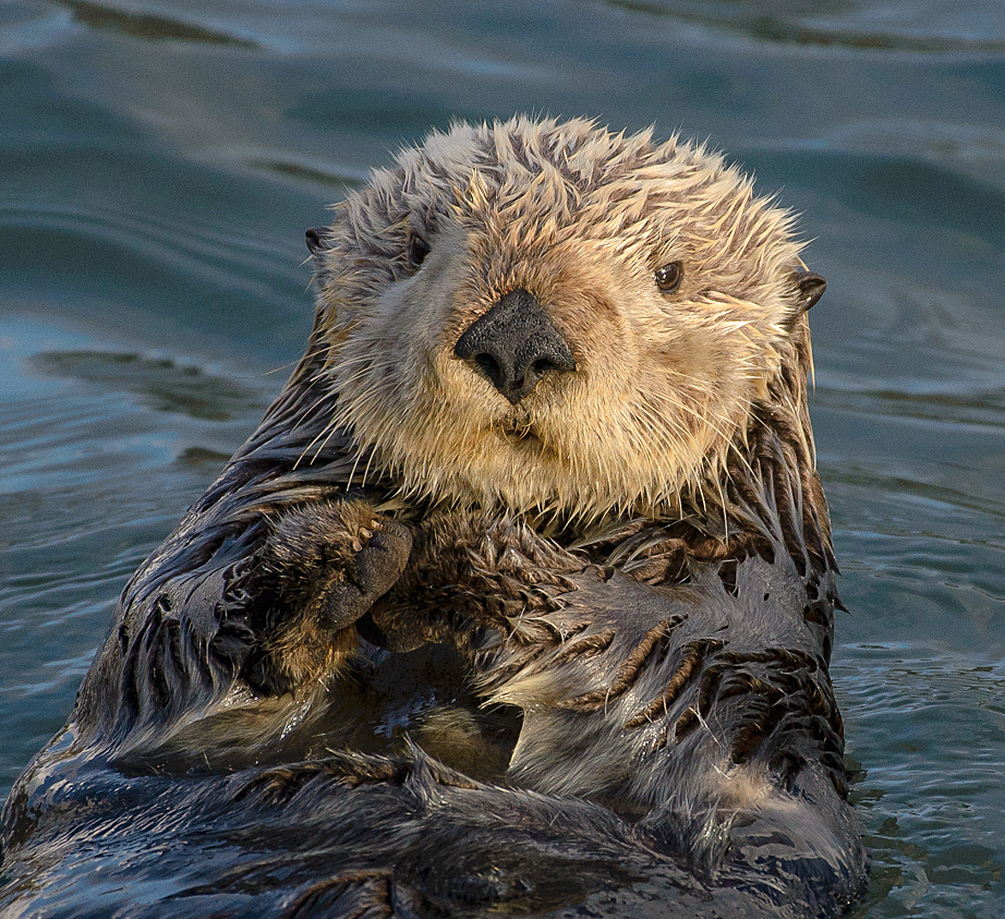 Pros and cons of conservation: how rebounding sea otter populations impact local economies