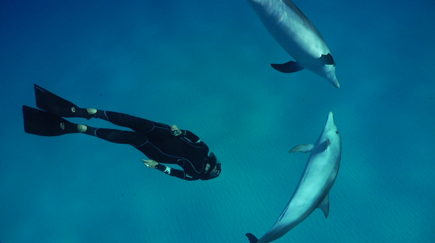 Life of the Party: Dolphin Personalities and Social Structures