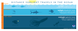 The zones of the ocean are dependent on how much sun light reaches their depth. Credit: NOAA