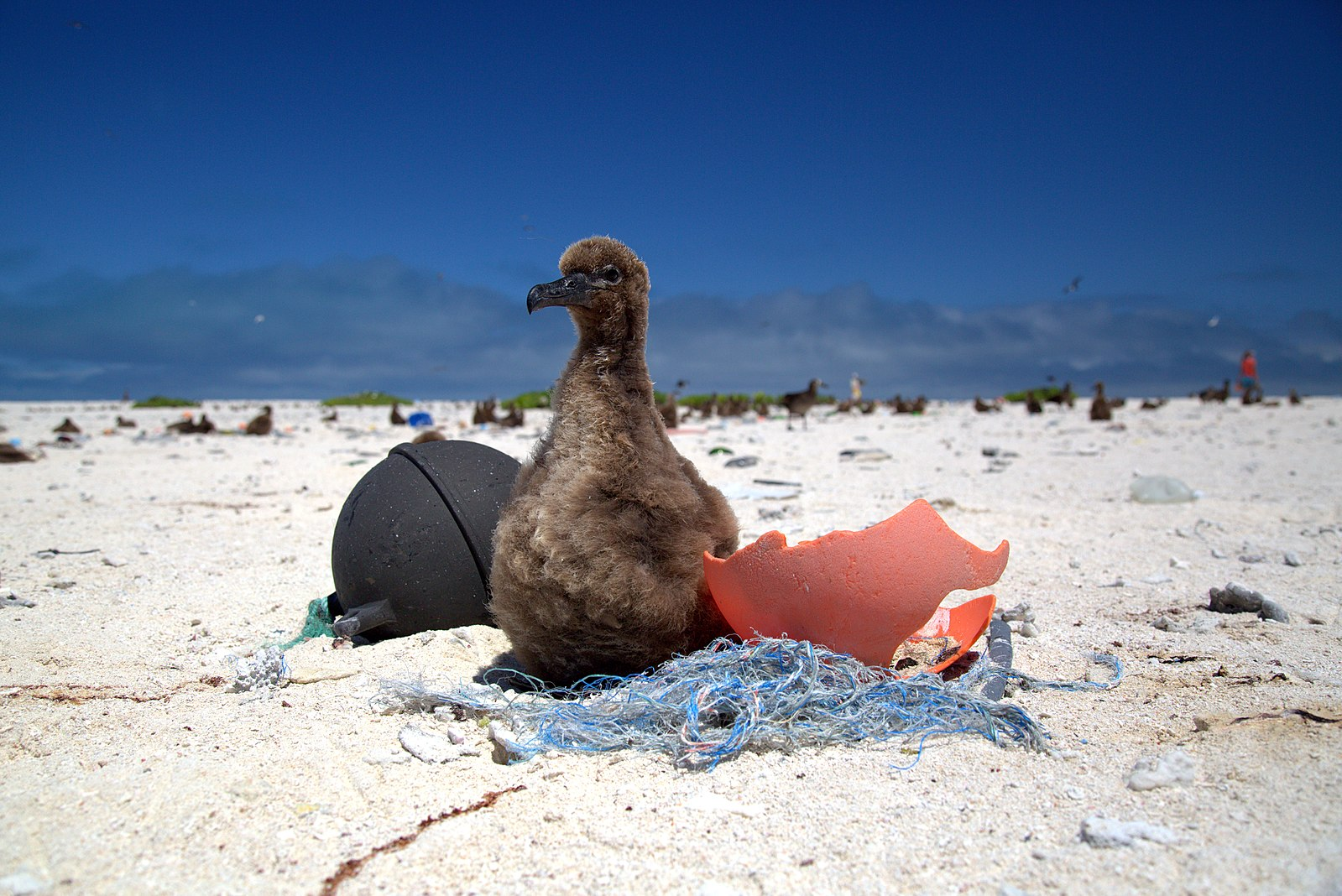 Is There Plastic in Paradise?