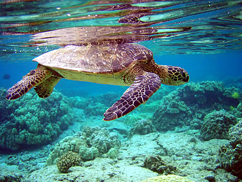 The Age-Old Question about Sea Turtles