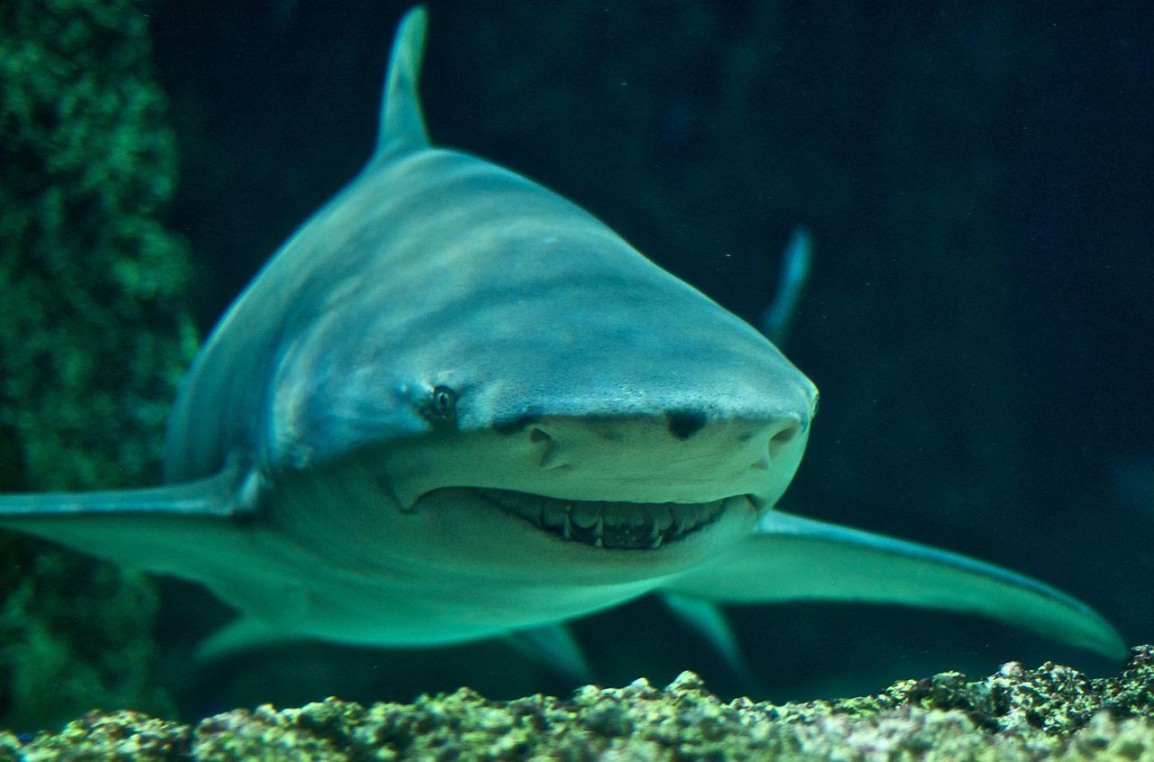 Shark Smarts: Can associative learning change shark behavior?