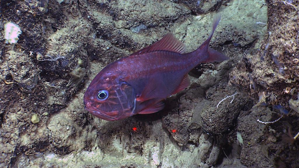 Bottom trawling may irreparably damage seamount habitats