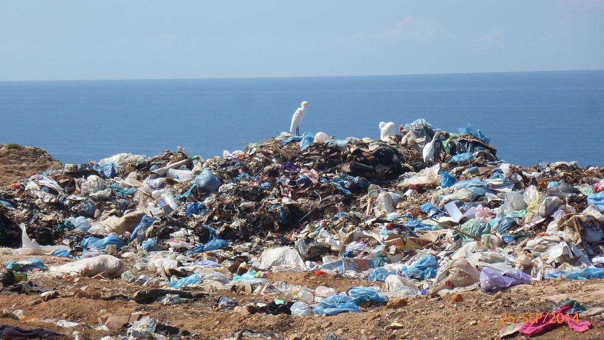 Ocean plastic pollution damages bacteria that help us breathe