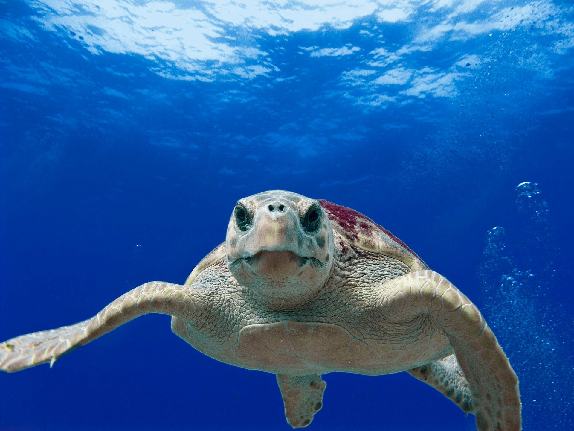 Crushed it: Sea turtles can help us understand hurricanes in the mid-Atlantic