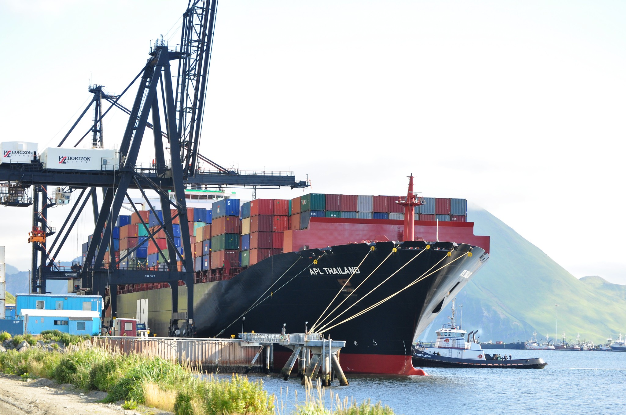 Shipping traffic increases risk of alien invasion