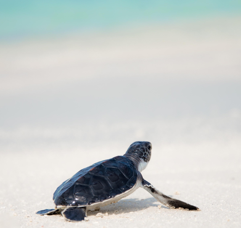 """Breaking Bad"" inspired robot tracks sea turtle poachers"