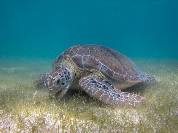 What do remote sensing, machine learning, and statistics have in common?  Enhancing the accuracy of seagrass monitoring, for one.