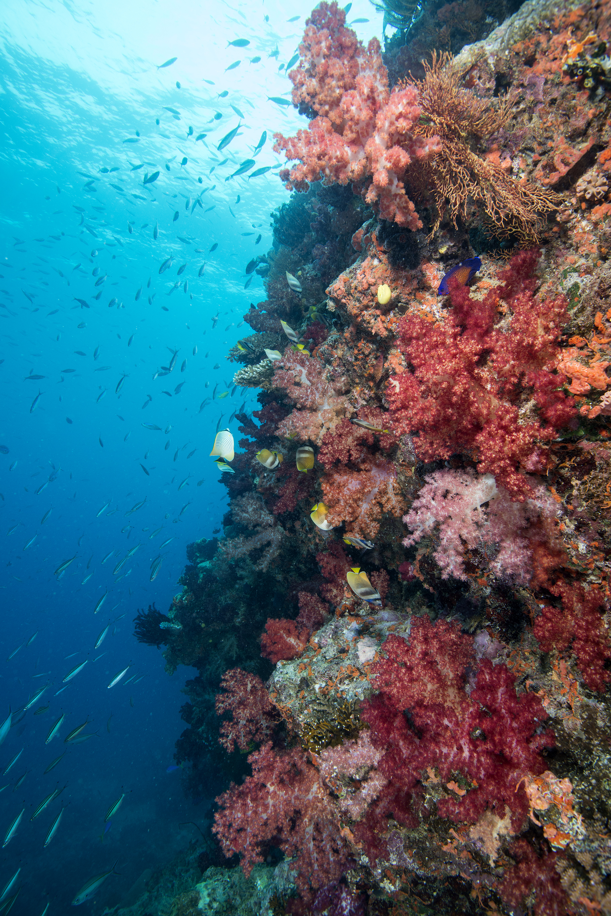Predicting the future of coral reefs is complicated by human impacts