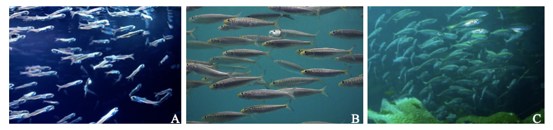 How to catch a dead fish: using eDNA to reconstruct past fish abundances