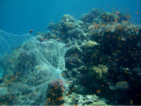 Don't get ~tide~ down: Are biodegradable nets a good solution to the ghost fishing problem?