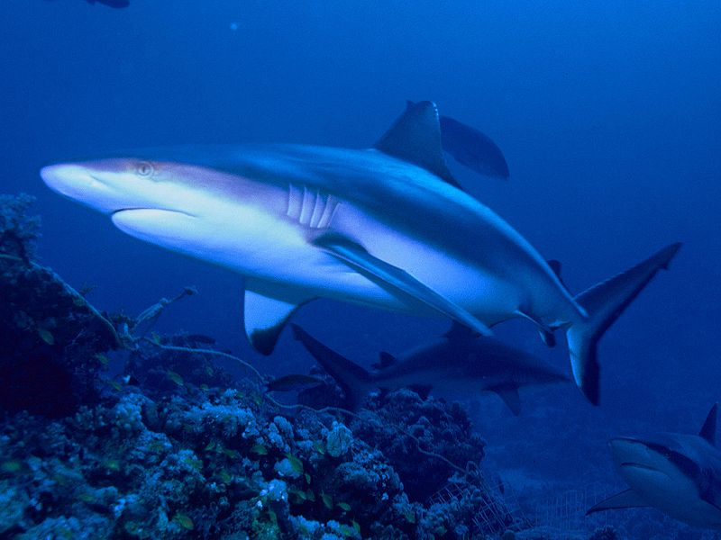 Aquatic predators: Our heroes for climate changing