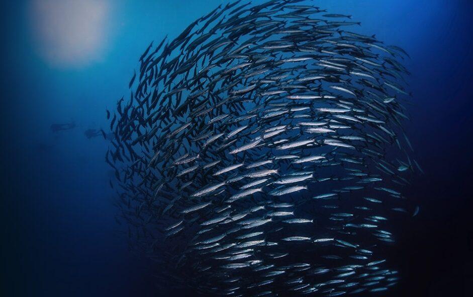 Schooling fish inspire underwater robot communication