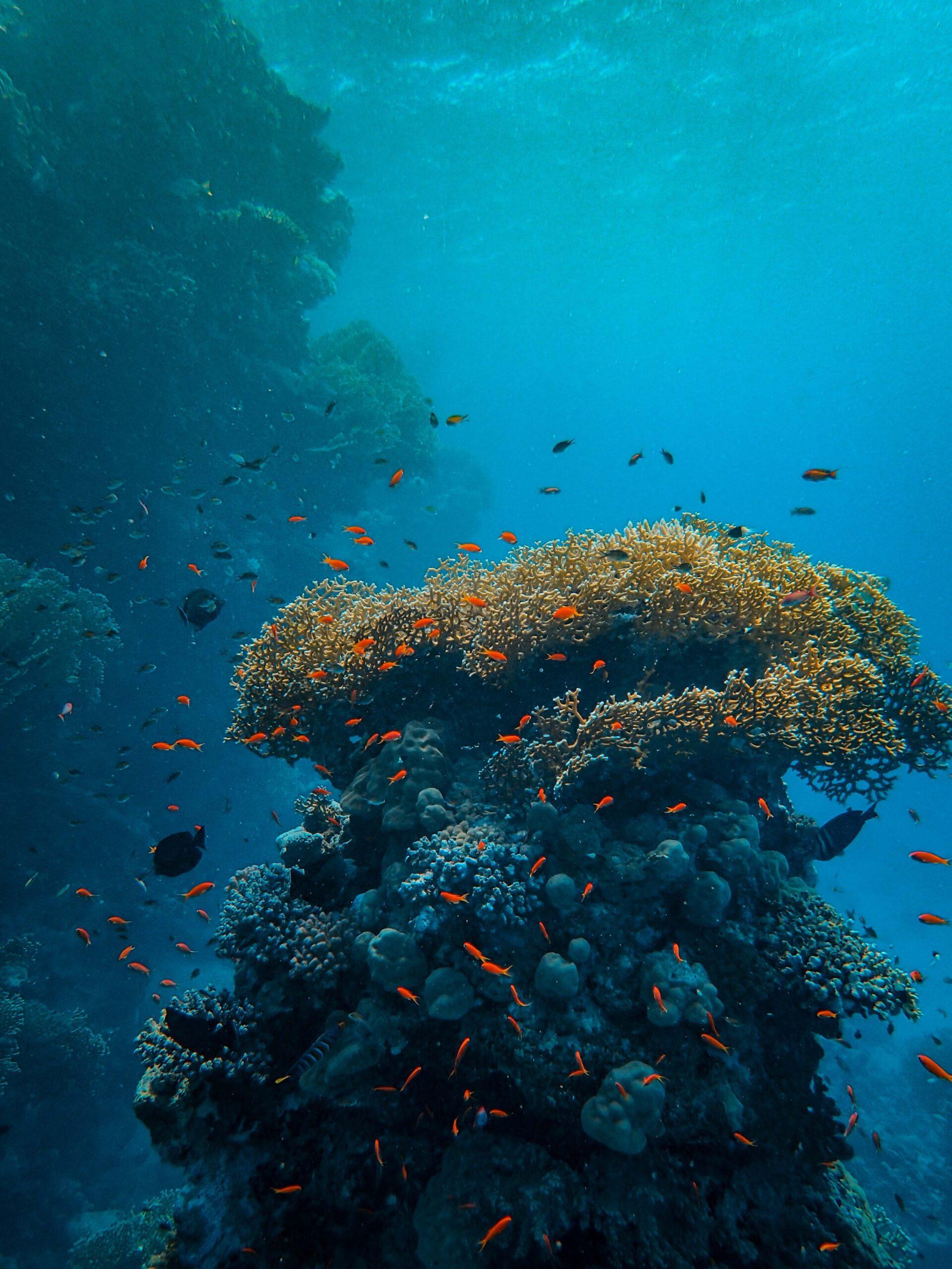 Giant clams share symbiotic algae with corals via poop