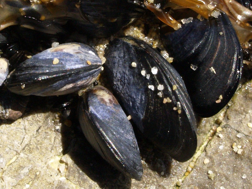 Living Life to the Fullest: Enzyme Activity of Two African Mussel Species