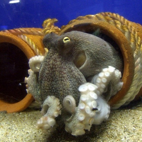 What do octopuses dream of when they take a little octopus snooze?