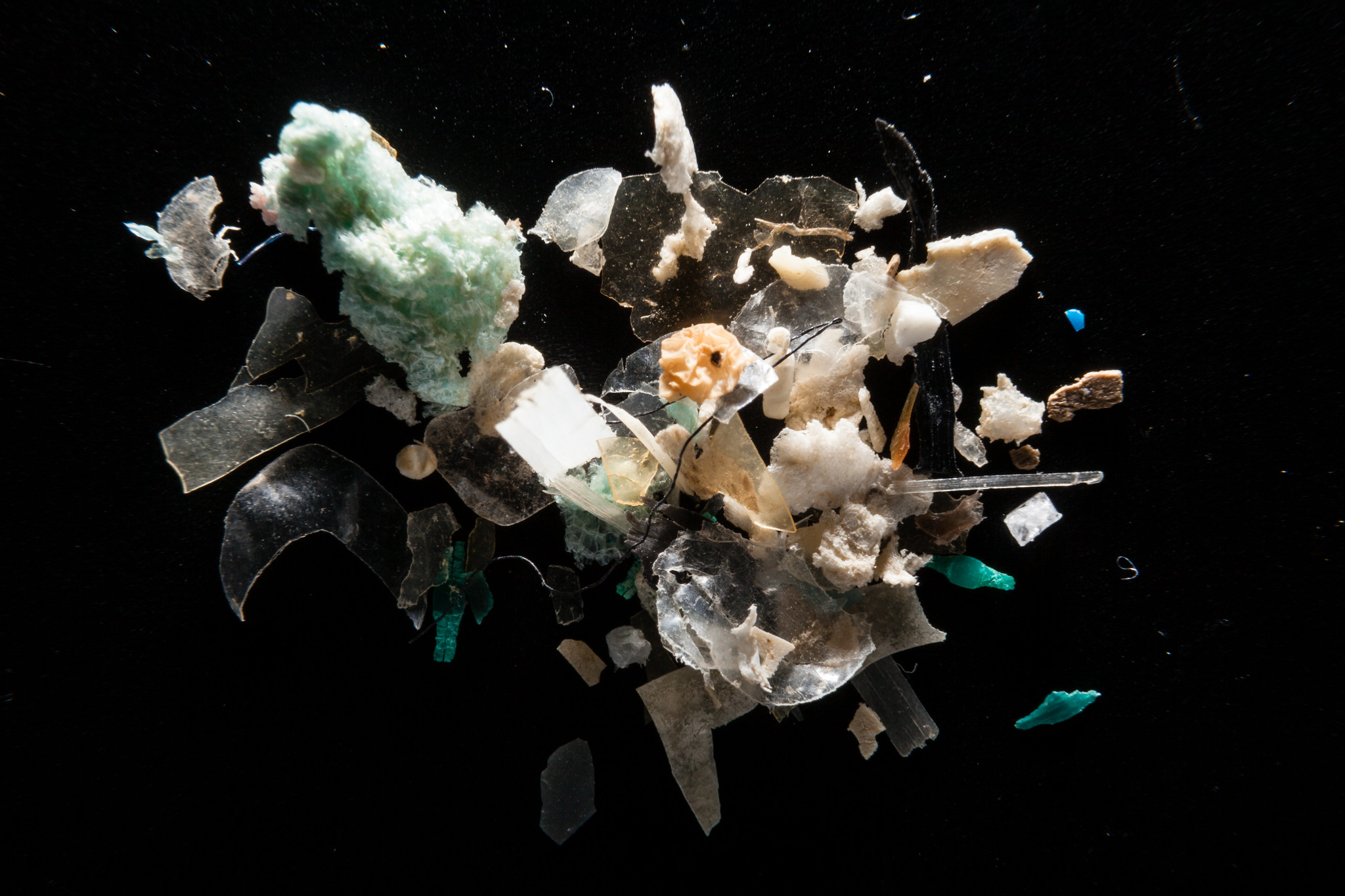 Let them eat plastic – Animals eating microplastic could choke the ocean