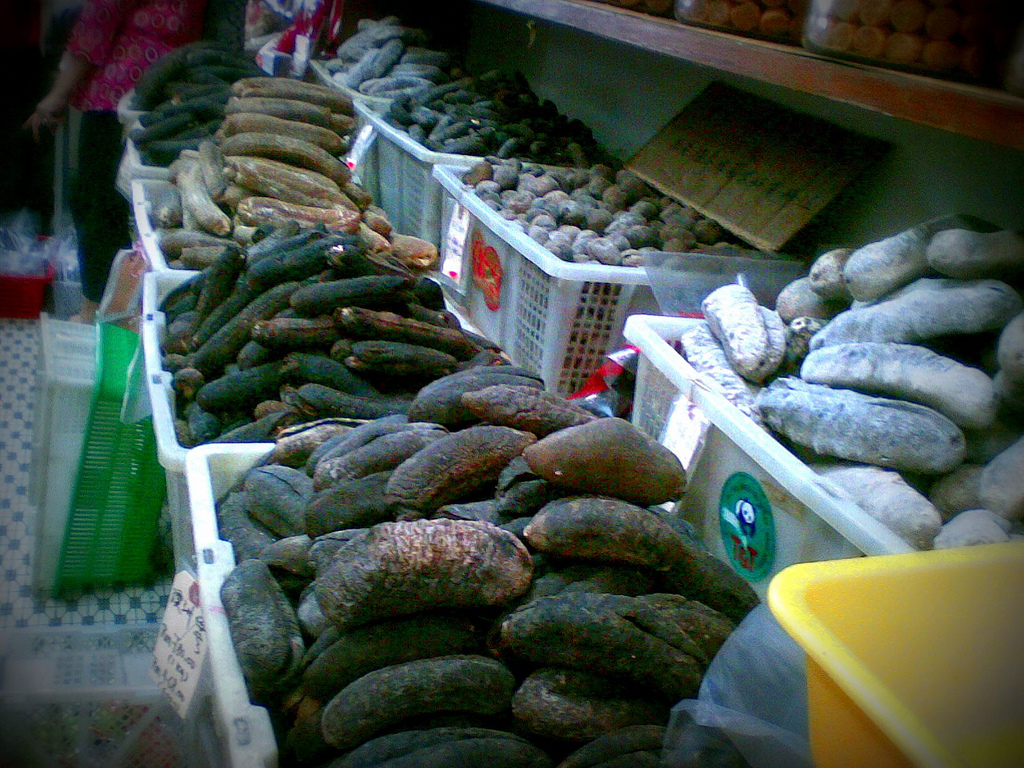 Booming sea cucumber market? It may be a free-for-all, but it's not good-for-all