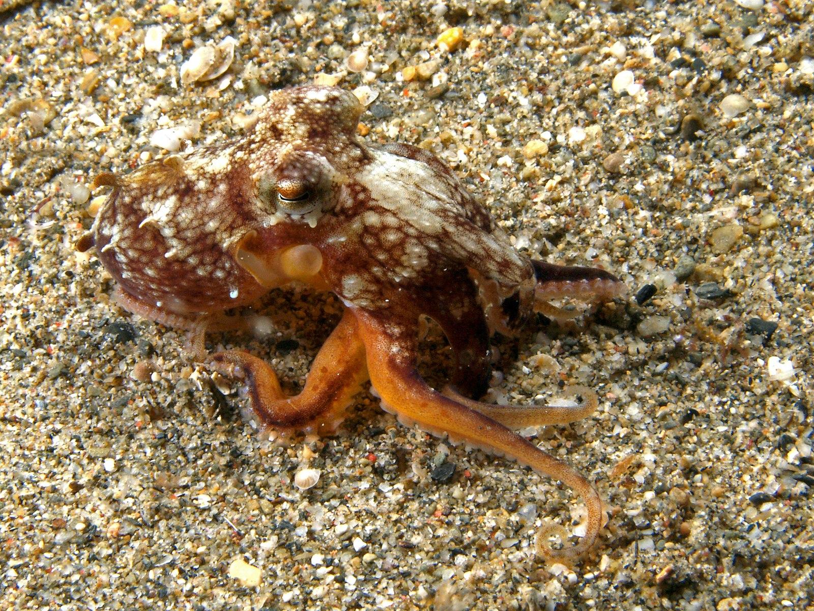 The bionic walking octopus