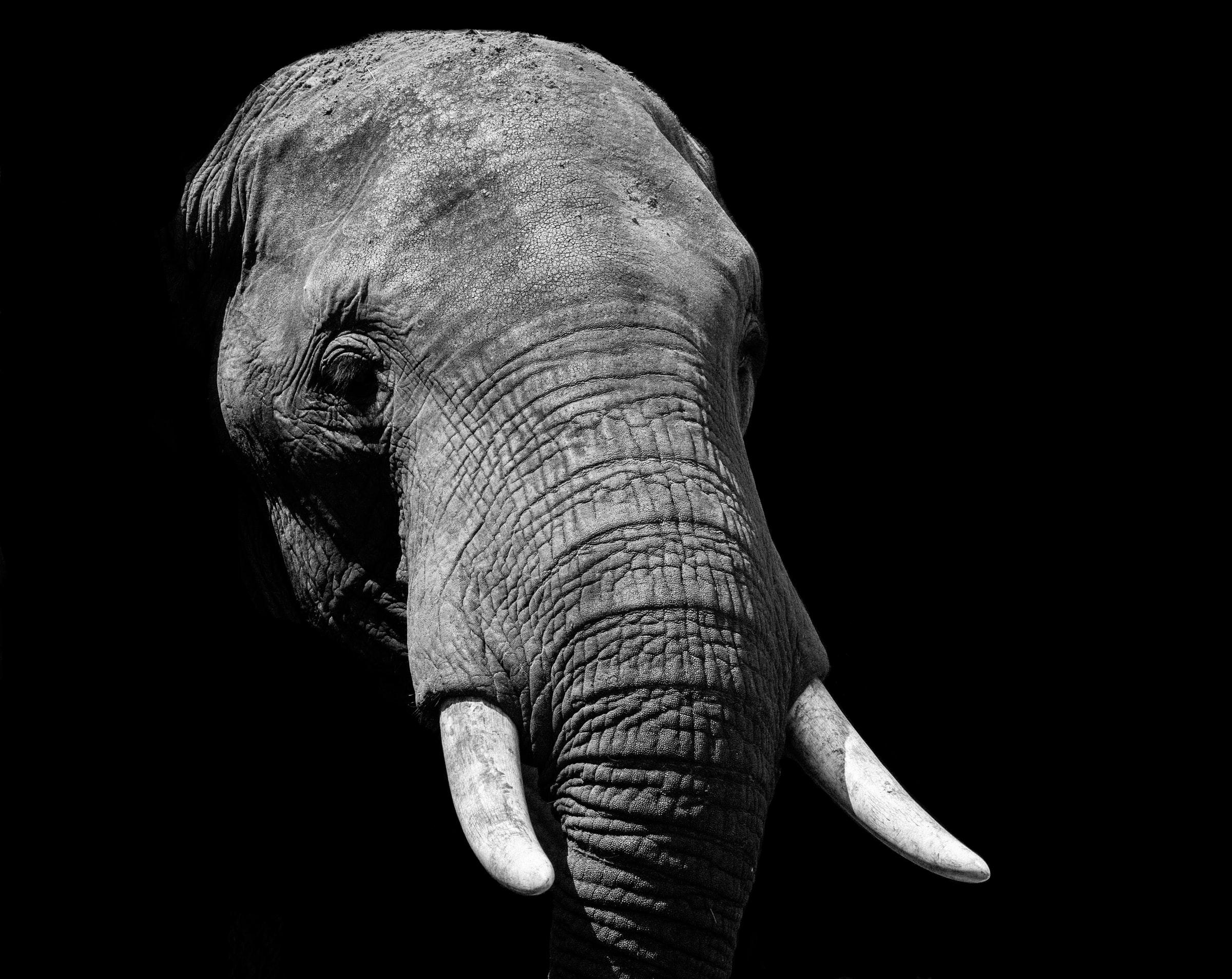 A shipwreck treasure reveals the tragic history of African elephants