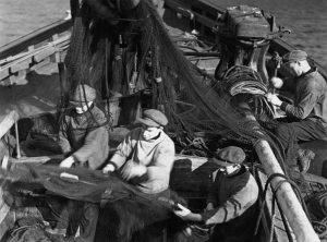 Historic photo of men pulling nets on herring boat