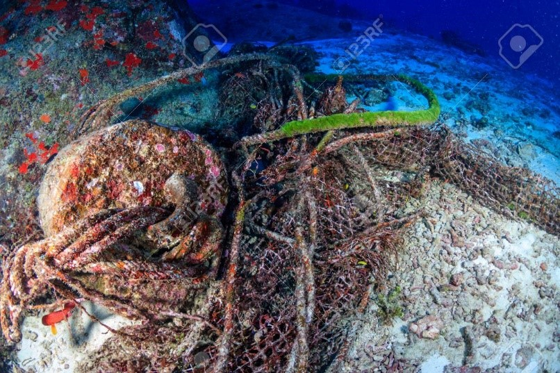 Biofouling Organisms Tell All About The Age Of Lost Fishing Gears