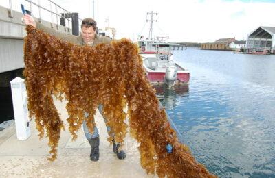 Experimental Kelp Farm Boosts Biodiversity and Ecosystem Health